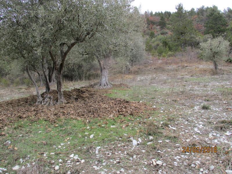 Les oliviers de Elie henry. Img_0825