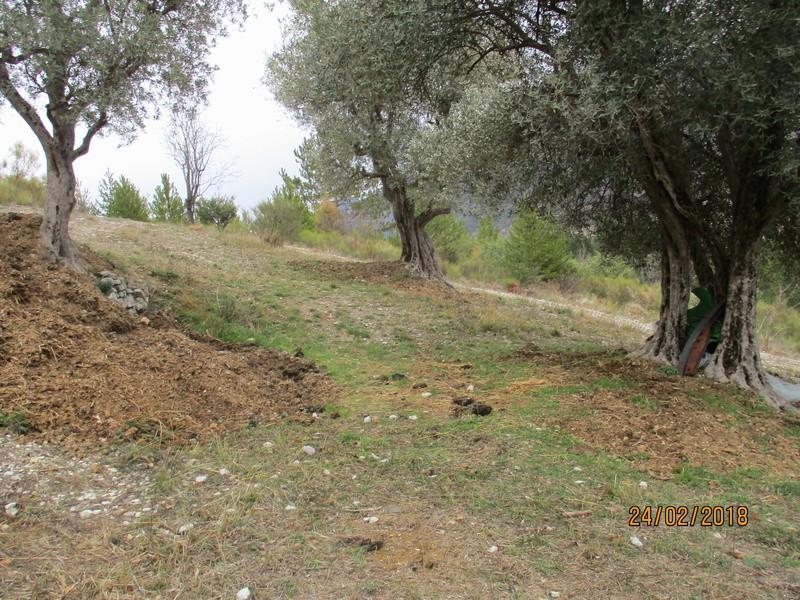 Les oliviers de Elie henry. Img_0827