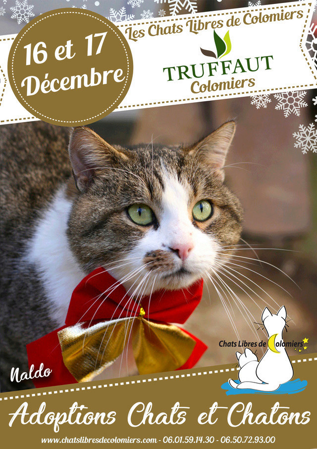 Week-end adoptions les 16 & 17 Décembre à Truffaut Colomiers Ja_dec10