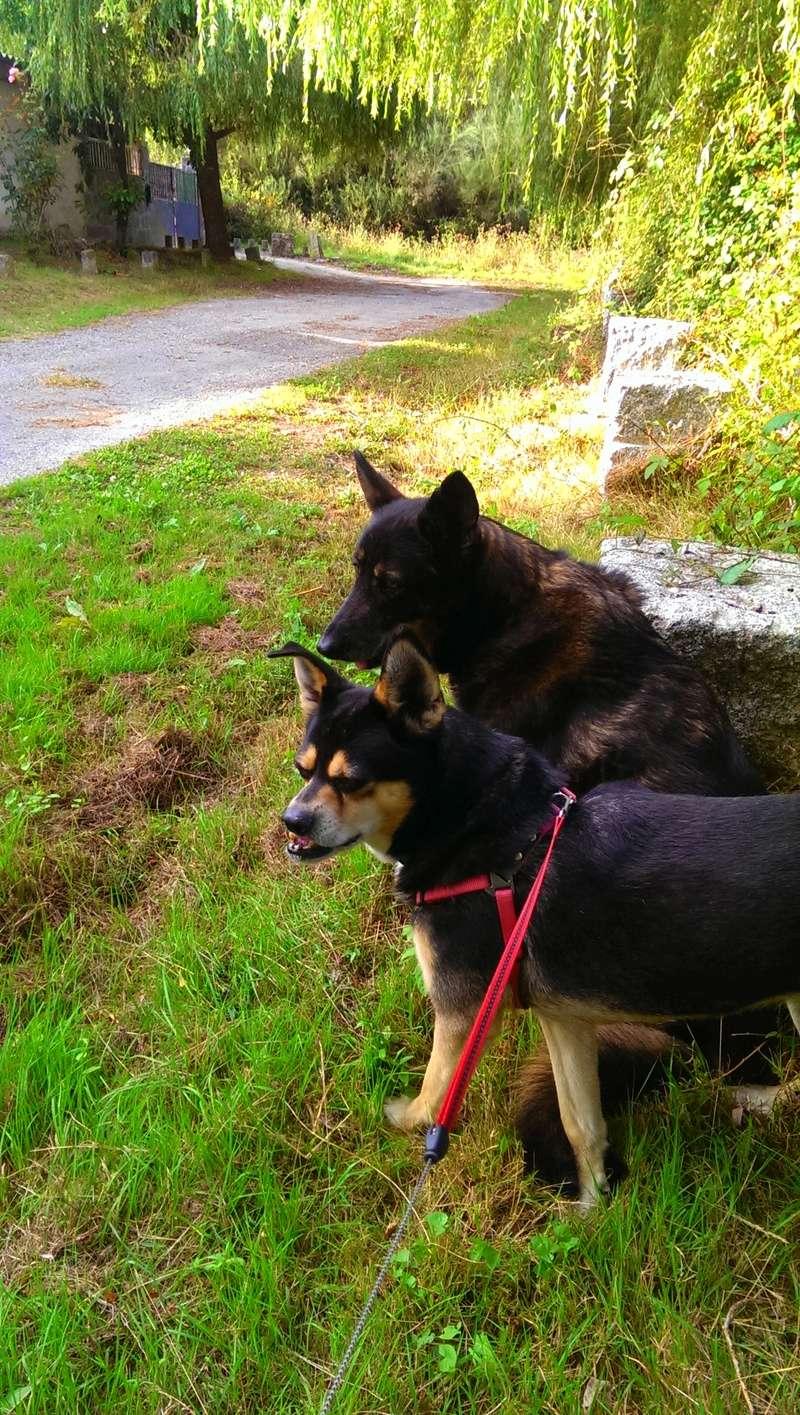 Que pensais de los perros? - Página 3 2014-010