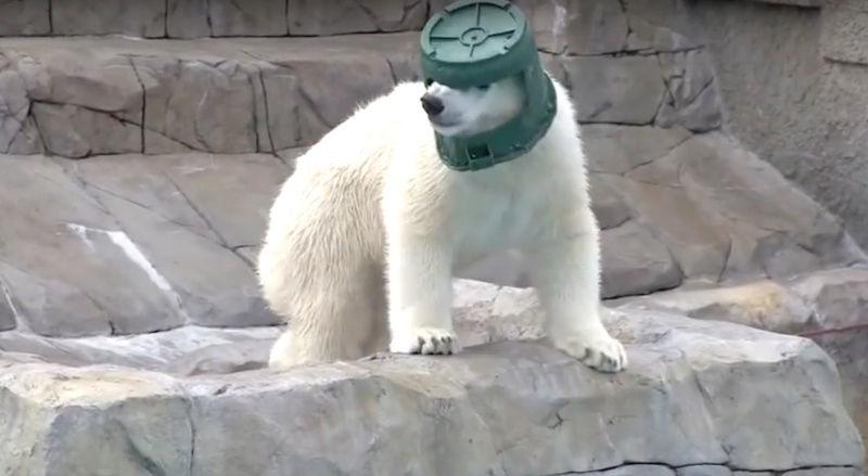 CASCOS FACIALES Polar-10