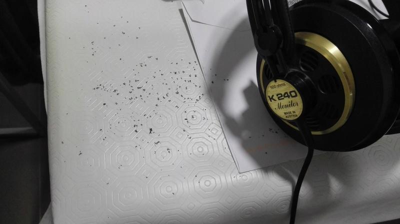 AKG K-240 MONITOR 600 omh Img_2012
