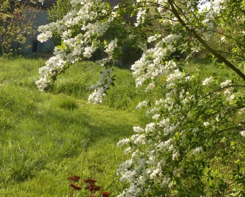 le jardin de l'abbaye en 2018 - Page 3 P1030245
