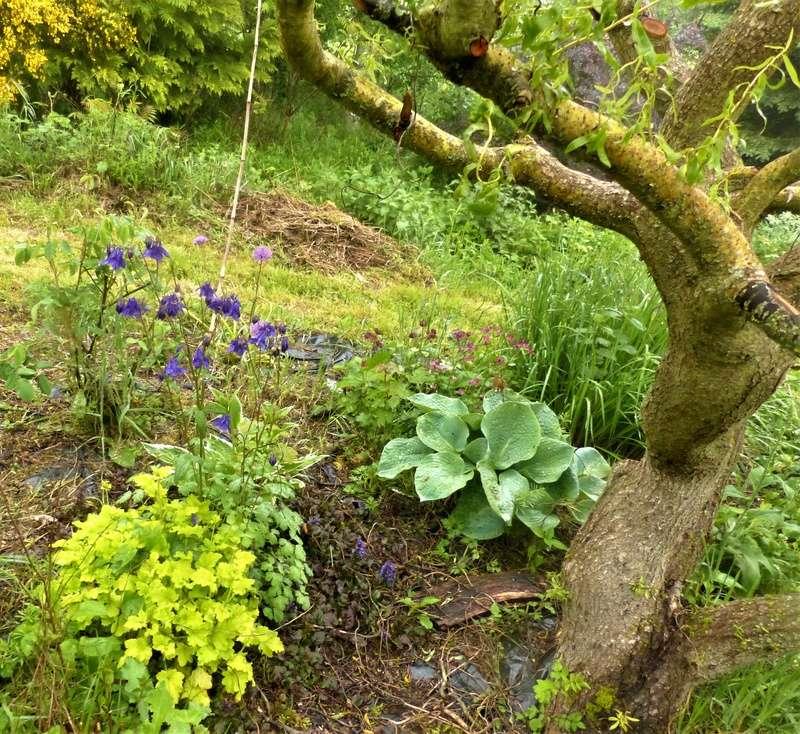 le jardin de l'abbaye en 2018 - Page 5 P1030542