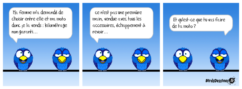 Les Birds - Page 10 37996410