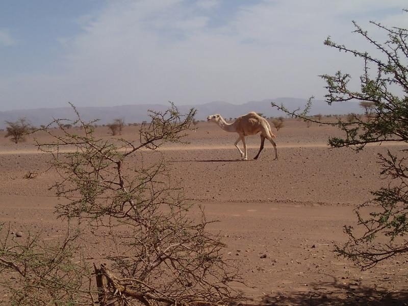 Maroc - Raid dans le Saghro Pb050520