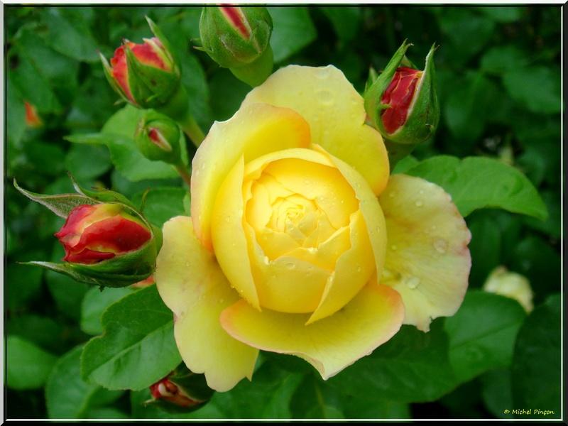 Thème du mois d'avril 2018 :  Passion, fleur ... fleurie !  Dsc01310