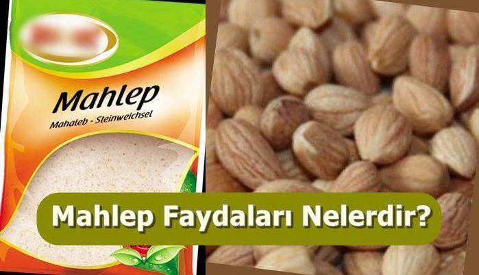 MAHLEP VE FAYDFALARI Mahep-10
