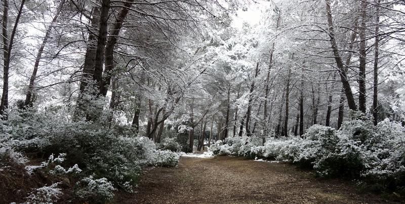 La neige sur mon village Dsc04010