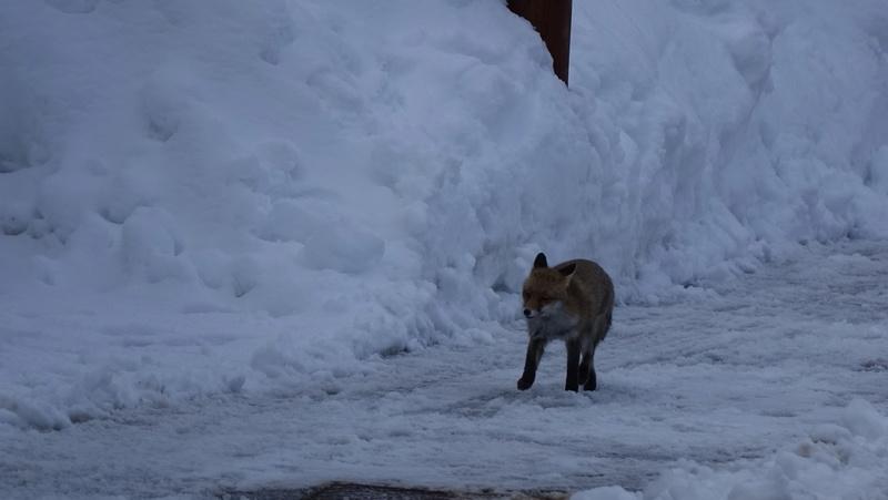 Un torrent sous la neige Dsc04011