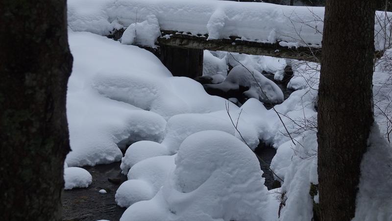 Un torrent sous la neige Dsc04014