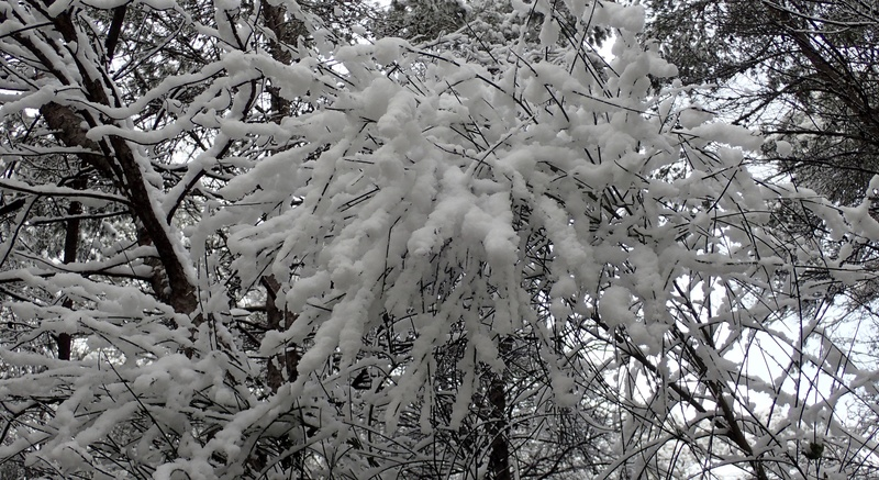 La neige sur mon village P2270010