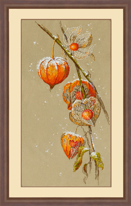 Physalis Golden11