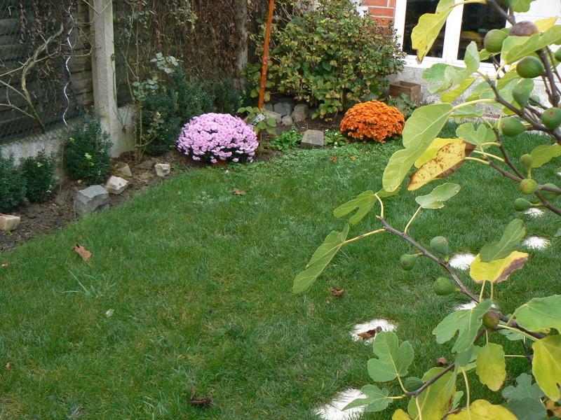 Les Jardins d'Athel Loren. P1160010