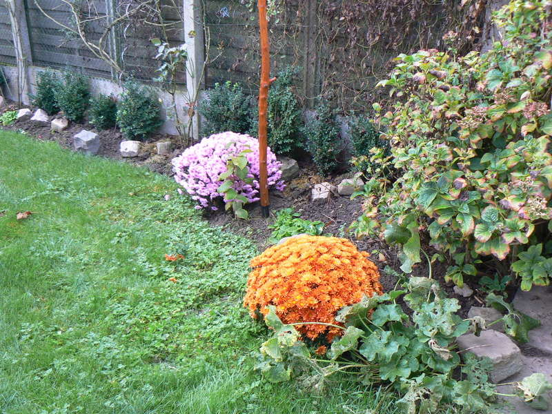Les Jardins d'Athel Loren. P1160013