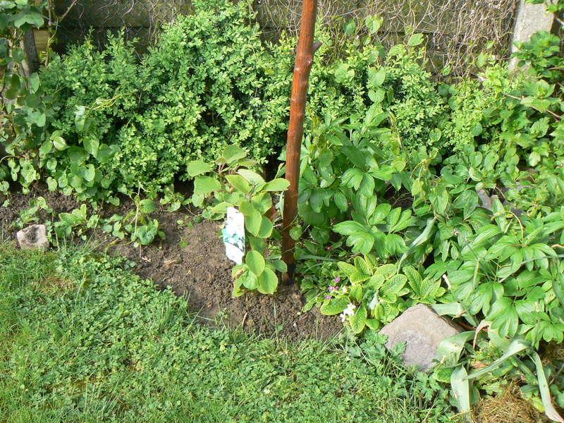 Les Jardins d'Athel Loren. P1160511