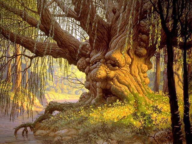 Hommages aux arbres 13071010