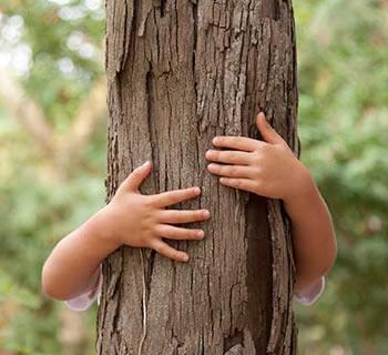Hommages aux arbres - Page 3 212