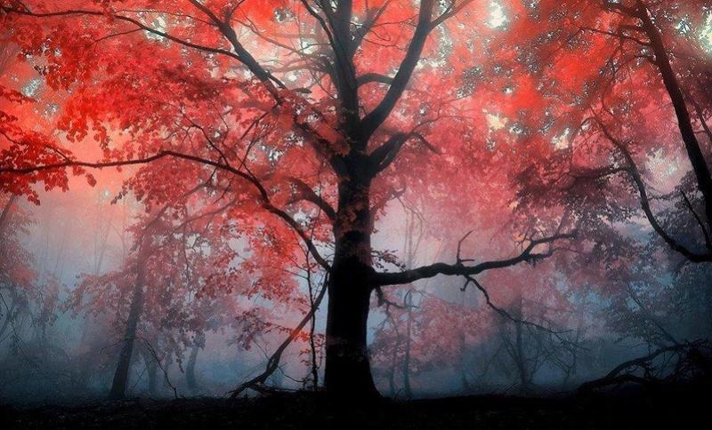 Hommages aux arbres - Page 3 28056210