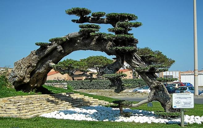 Hommages aux arbres Henri-10