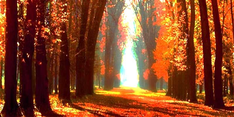 Hommages aux arbres - Page 3 O0jqtj10