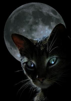Mace e zezë apo mace e bardhë? Macja10