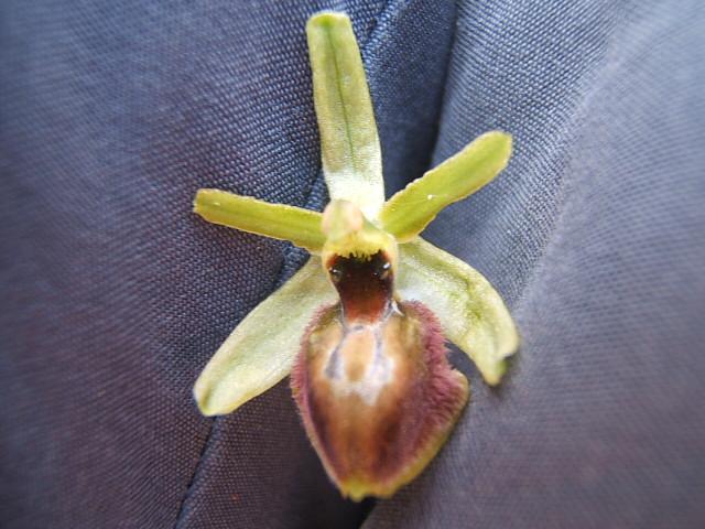 Les Orchidées sauvages Dscf6233
