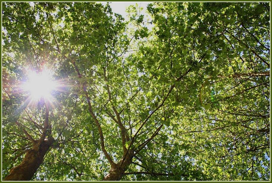 au près de mon arbre .. Piq_ni12