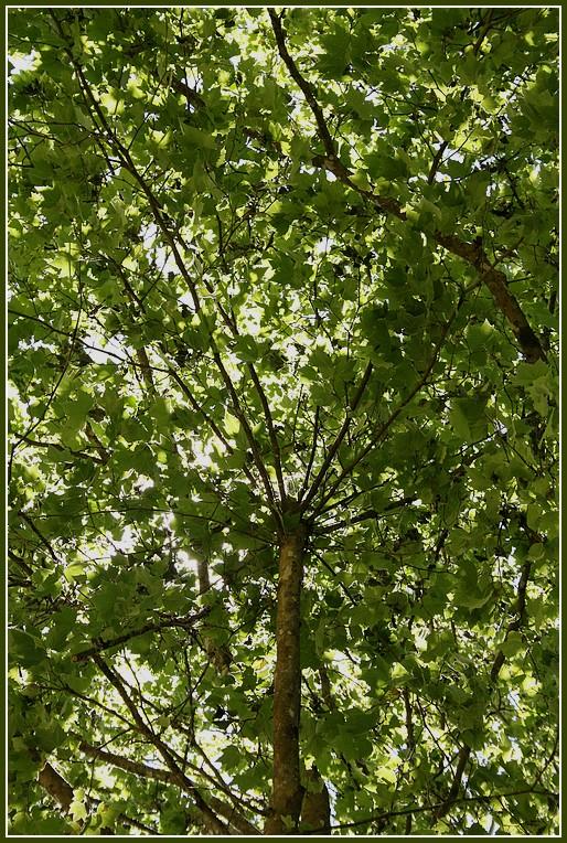 au près de mon arbre .. Piq_ni13