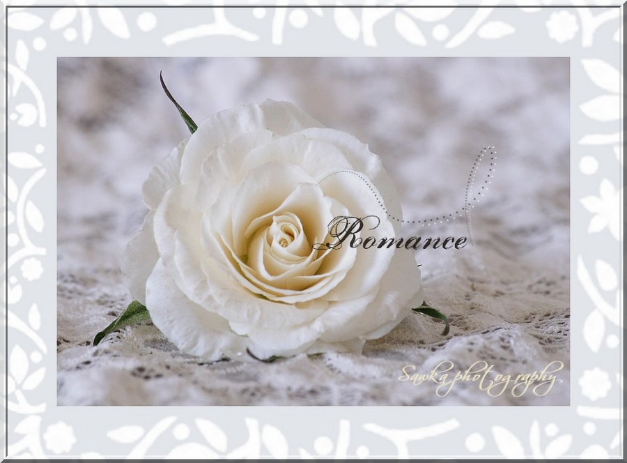 Romance Roses_19