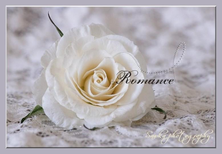 Romance Roses_20
