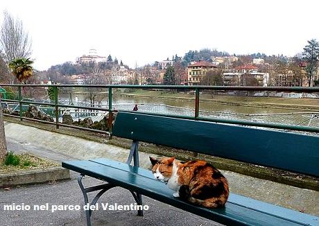 Foto strane....... ma simpatiche - Pagina 2 Animal25