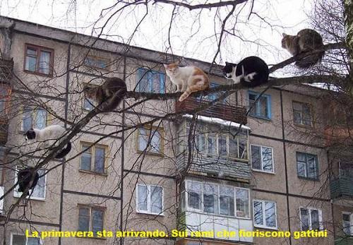 Animali... strani Miao12