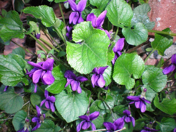 Le foto di Luisa - Pagina 2 Violet10