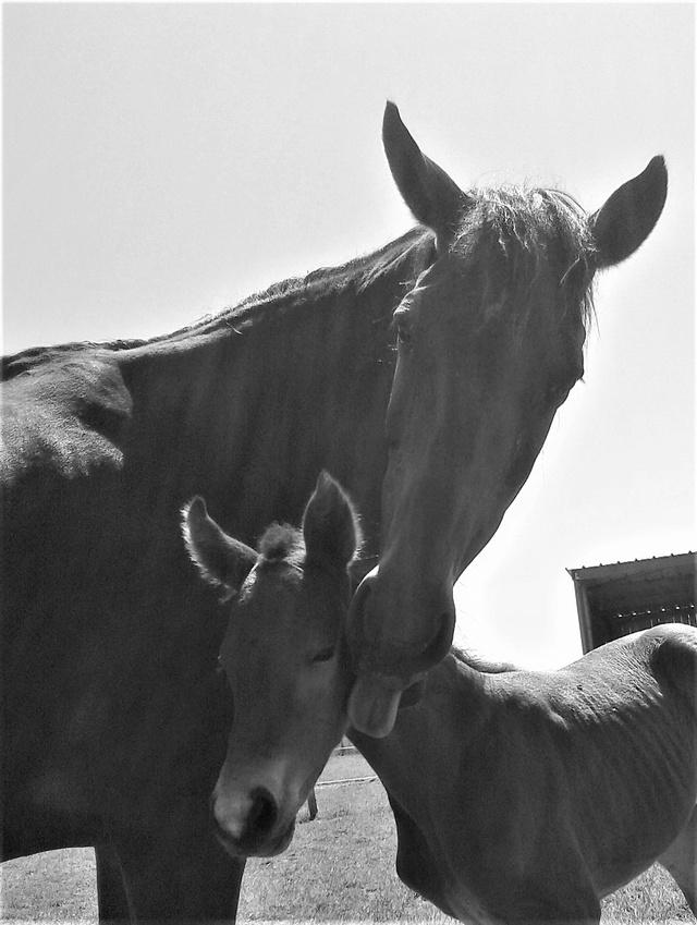 """ON VOTE Concours photos """"Nos chevaux et la tendresse"""" 20160510"""