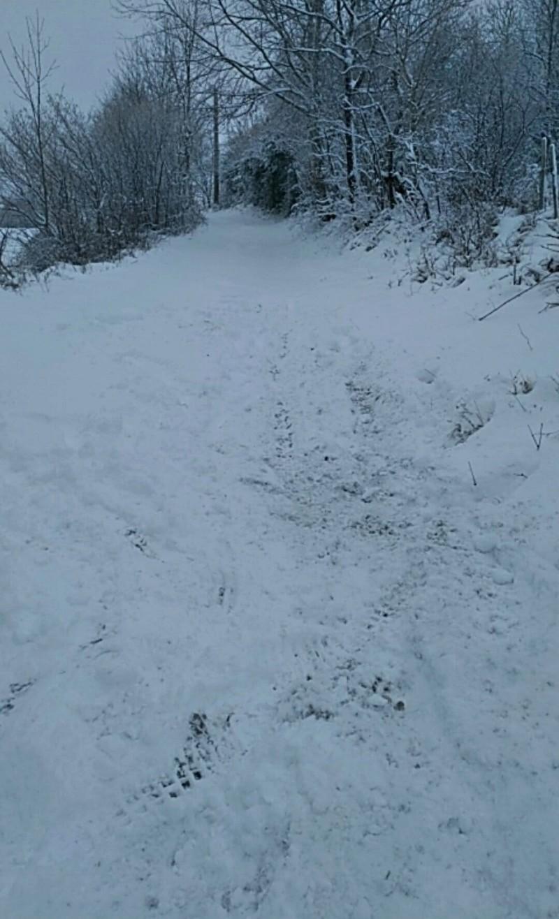 ma matinée dans la neige Receiv14