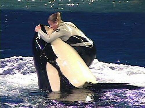 [photo] Comparaisons  impressionnantes orques / humains - Page 2 Kayla111