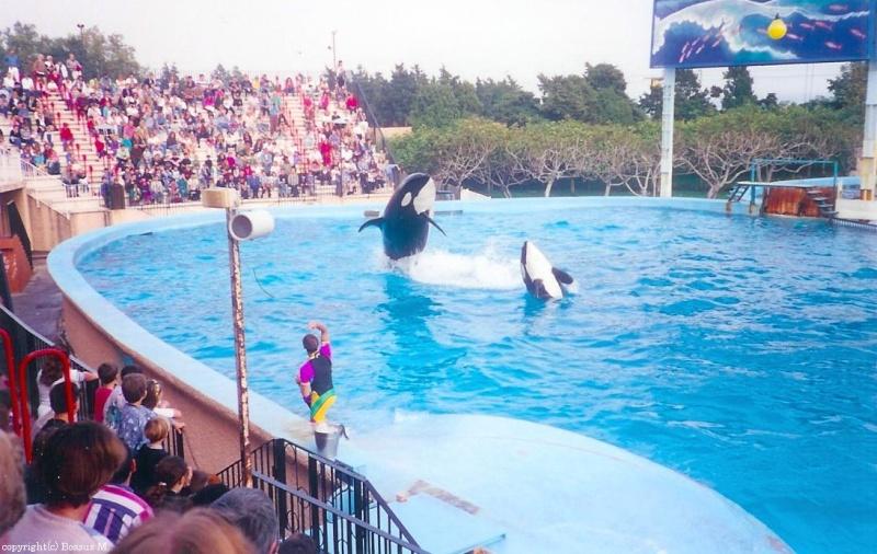 [Photos] Les orques captives quand elles étaient bébé - Page 4 Orca410