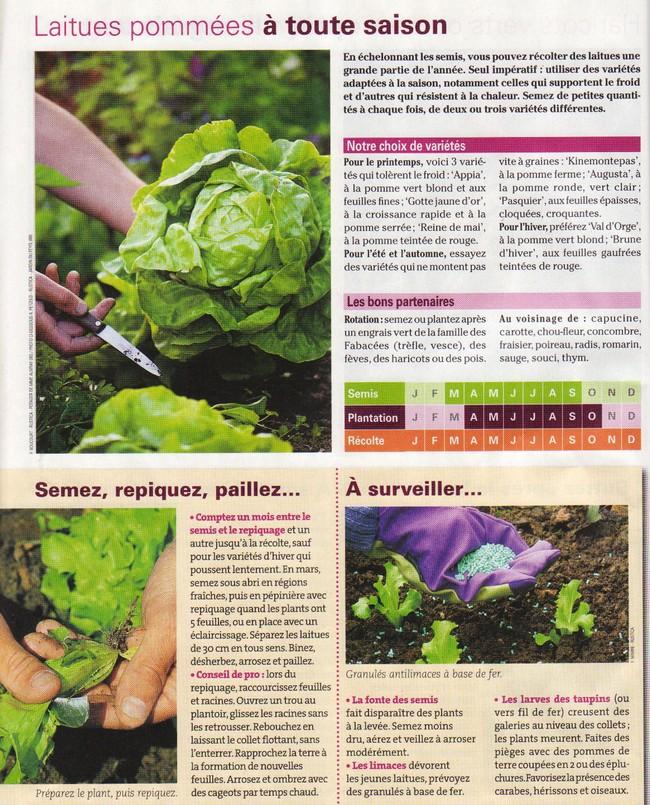 Salades Img_1073