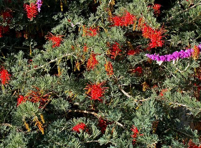 Plantes de balcon et de terrasse Phot210