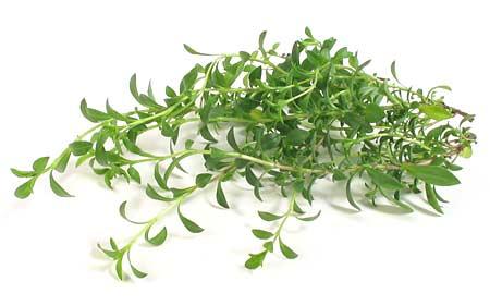 Herbes / épices et aromates Sarrie10