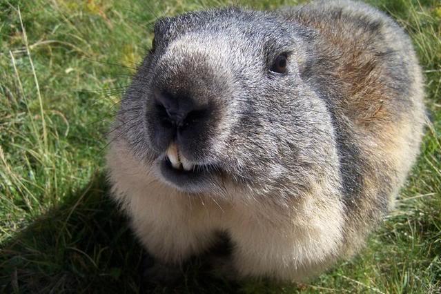 aléa climatique Marmot10