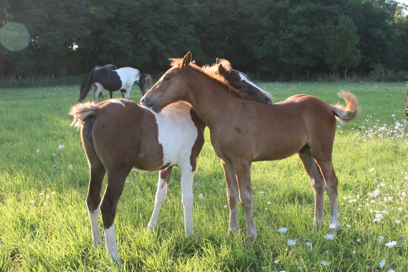 "ON VOTE Concours photos ""Nos chevaux et la tendresse"" Img_5410"