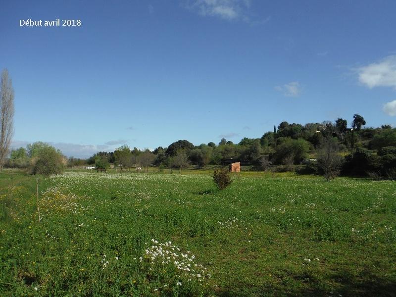 JdB de 4 hectares de pâtures dans le SUD : Avril 2019, et toujours la sécheresse... - Page 8 10021p10