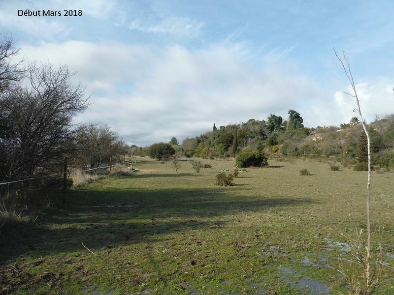JdB de 4 hectares de pâtures dans le SUD : Avril 2019, et toujours la sécheresse... - Page 8 1020pa10