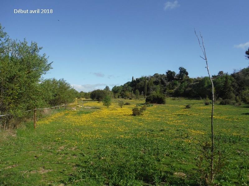JdB de 4 hectares de pâtures dans le SUD : Avril 2019, et toujours la sécheresse... - Page 8 1021pa10