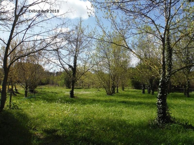 JdB de 4 hectares de pâtures dans le SUD : Avril 2019, et toujours la sécheresse... - Page 8 11021p10