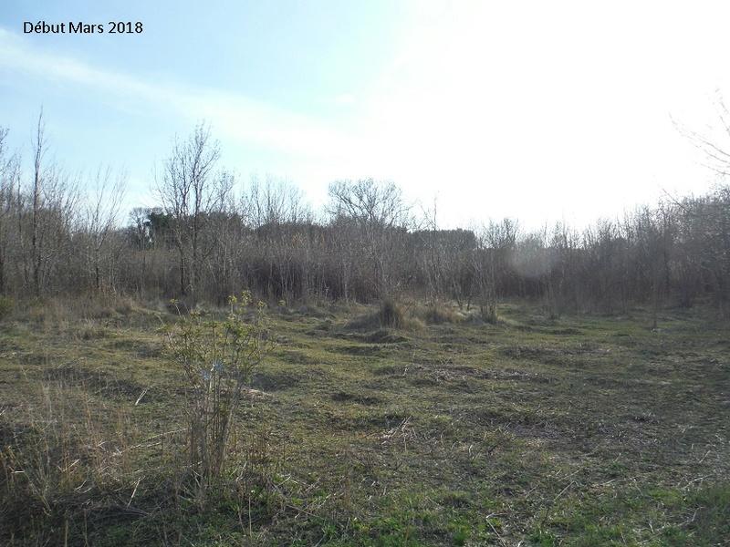 JdB de 4 hectares de pâtures dans le SUD : Avril 2019, et toujours la sécheresse... - Page 8 13020p10