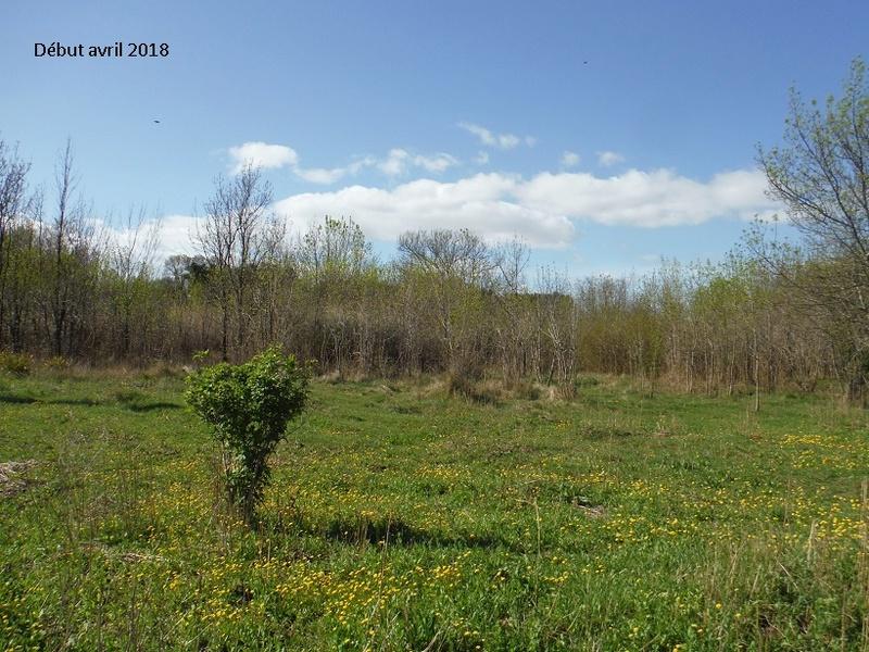 JdB de 4 hectares de pâtures dans le SUD : Avril 2019, et toujours la sécheresse... - Page 8 13021p10