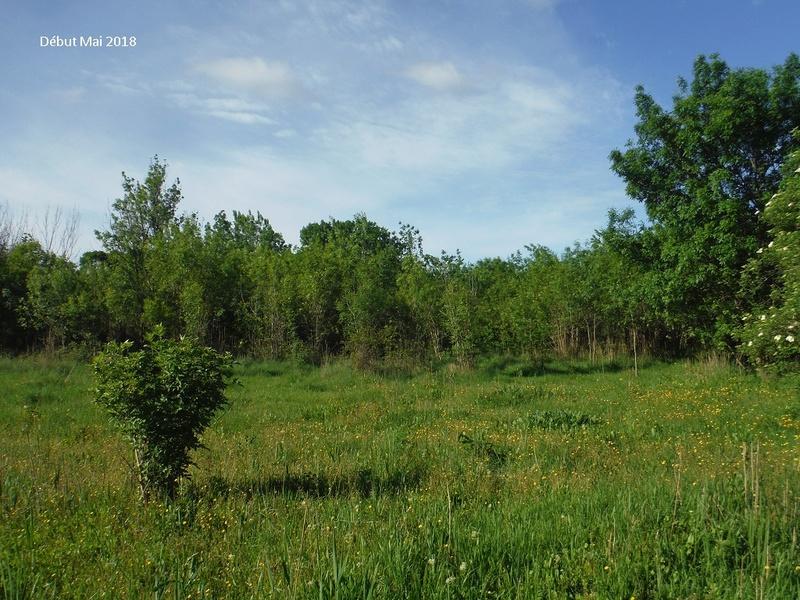 JdB de 4 hectares de pâtures dans le SUD : Avril 2019, et toujours la sécheresse... - Page 8 13022p10